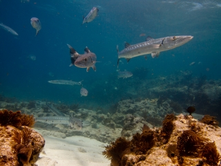 20110105_reef-shark-day_3785