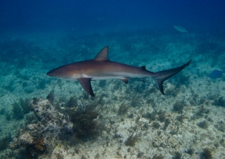 20110105_reef-shark-day_3798