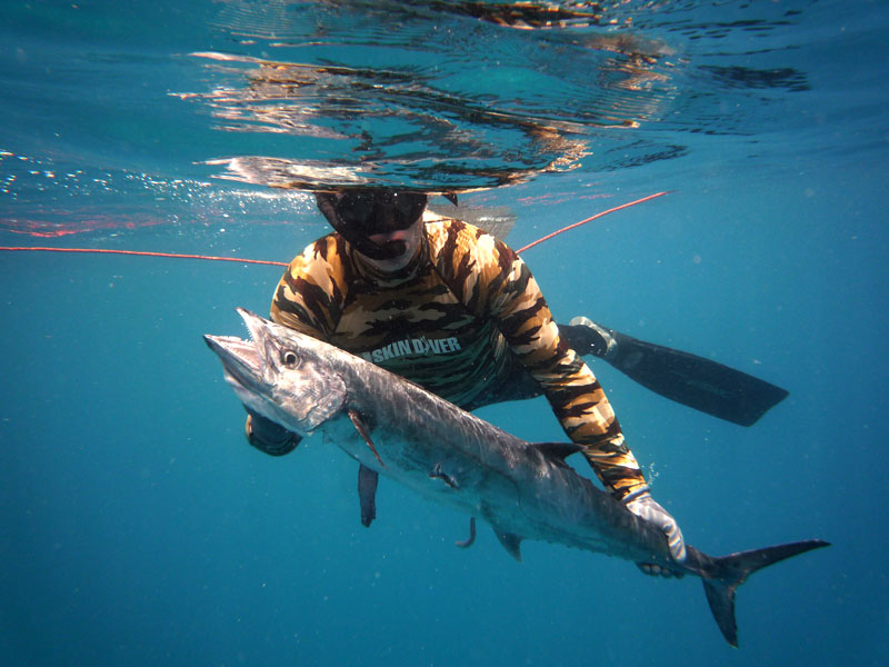 Good vis is back key west spearfishing reports pictures for Fishing kings free