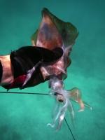 squid-003