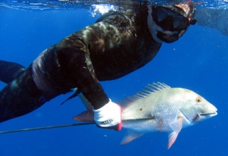 mutton-snapper.jpg