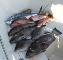 Key West Spearfishing