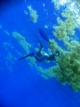 blue-water-spearfishing.jpg