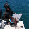 grey-triggerfish