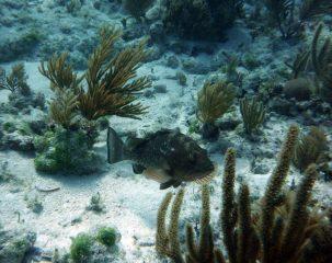 turtle-brian-257.jpg