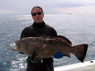 key-west-black-grouper.jpg
