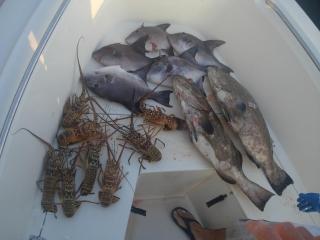 lobsters-triggerfish-blacks.JPG