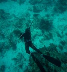 black-grouper-spearfishing
