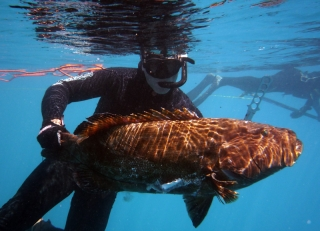 groupers-jetty-017