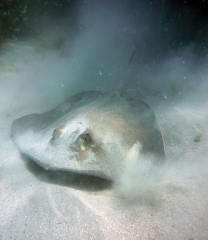 groupers-jetty-159