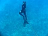 freedive spearfishing