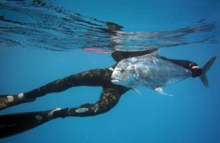 african-pompano-spearfishing