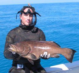 grouper 144.jpg