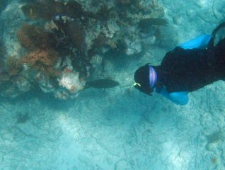 Red Grouper and Diver