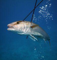 whale-shark-025
