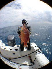 key-west-hogfish.jpg