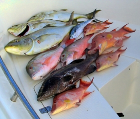 spearfishing-key-west.jpg
