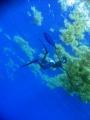 blue-water-spearfishing.jpg