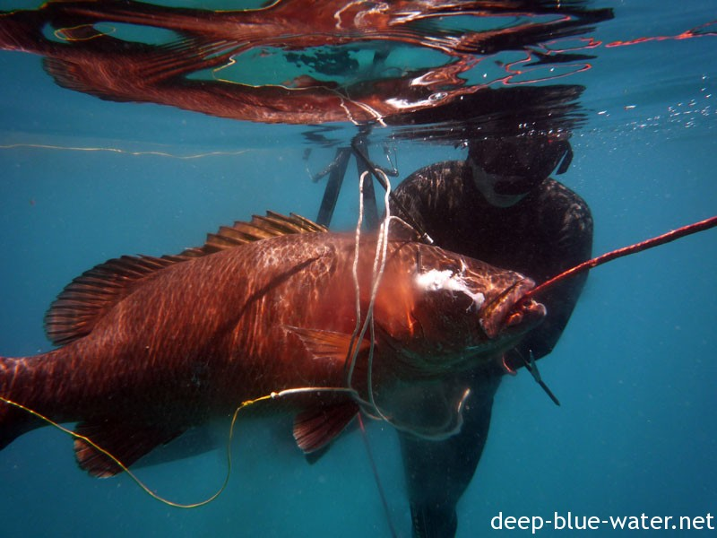 Spearfishing Marquesas Keys