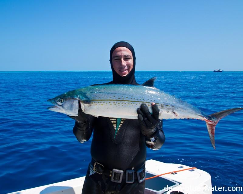 World Record Cero Mackerel