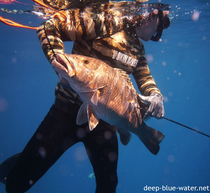 Spearfishing the Navy Towers