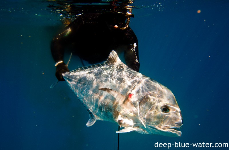 Shallow Muttons and a Pompano