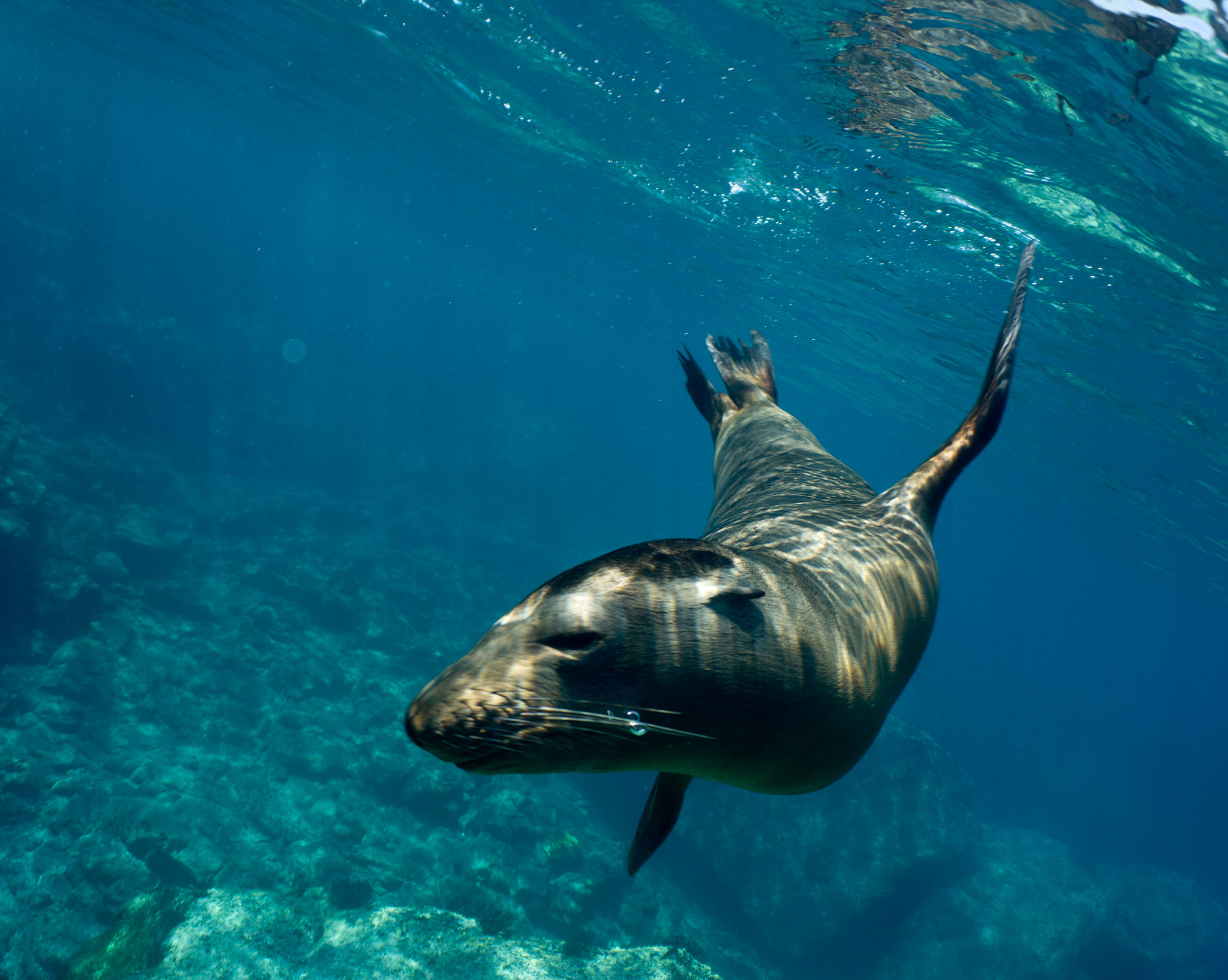 Mexico 2015 Part 2 – Sea lions